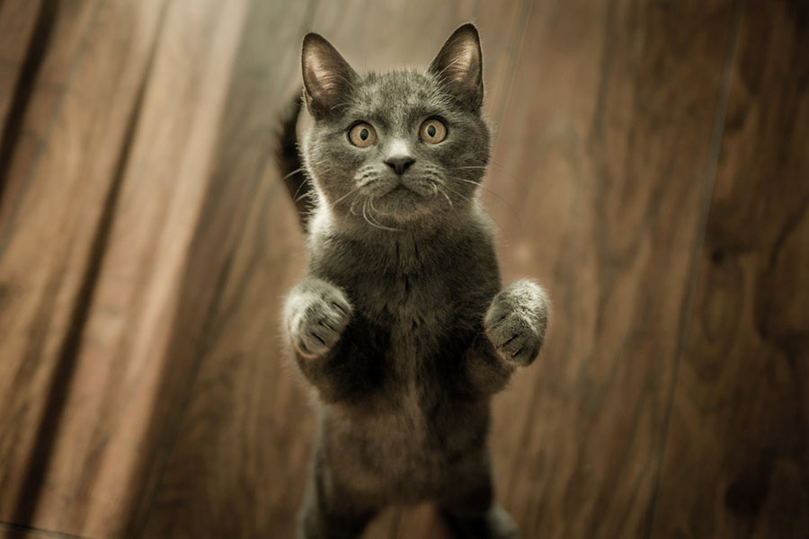 tanda kucing sayang